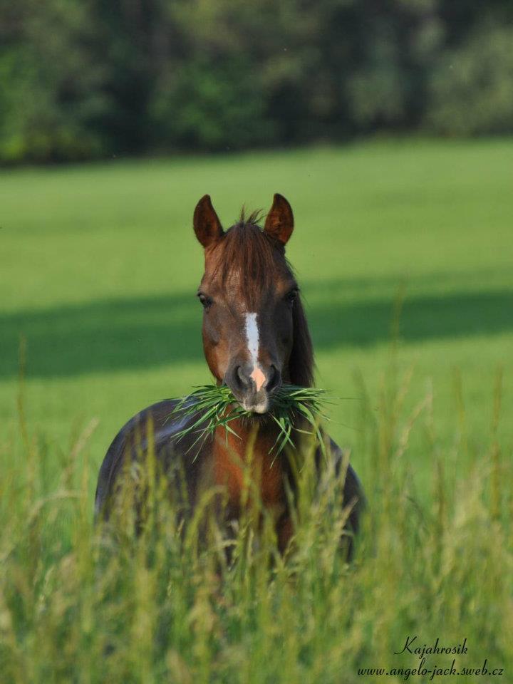 25.5.2012 Avi v trávě